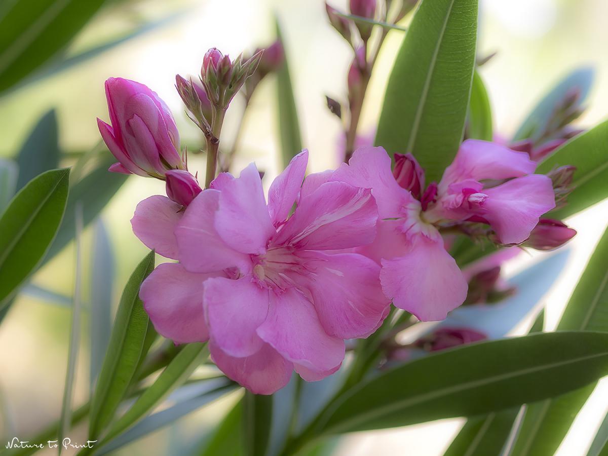 Viva Itallia! Feiern Sie inmitten mediterraner Pflanzen italienische Gaumenfreuden.