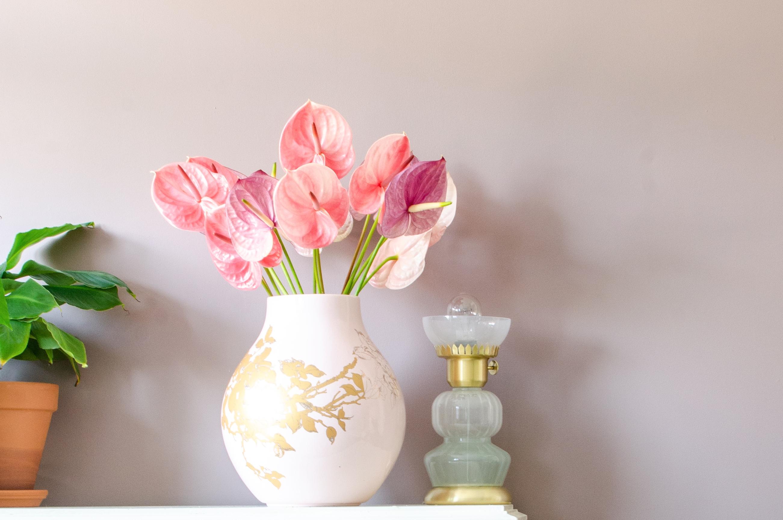 Anthurien begeistern in der Vase auch in zarten Pastelltönen